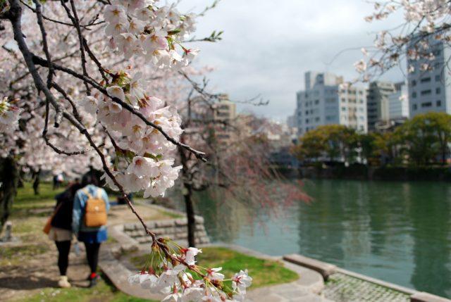 Hiroshima, ciliegi in fiore nel parco della Pace