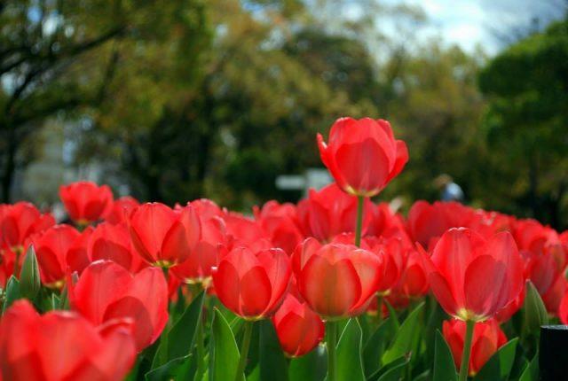 Hiroshima, fiori nel parco della Pace