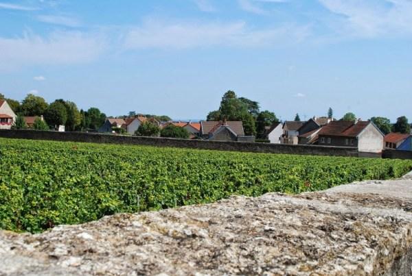 Le vigne fin dentro al paese di Gevrey-Chambertin (foto di Patrick Colgan, 2014)