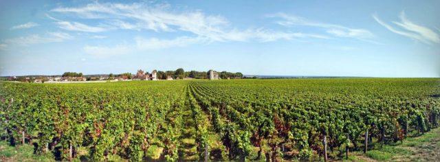 Vigne della Borgogna: panorama