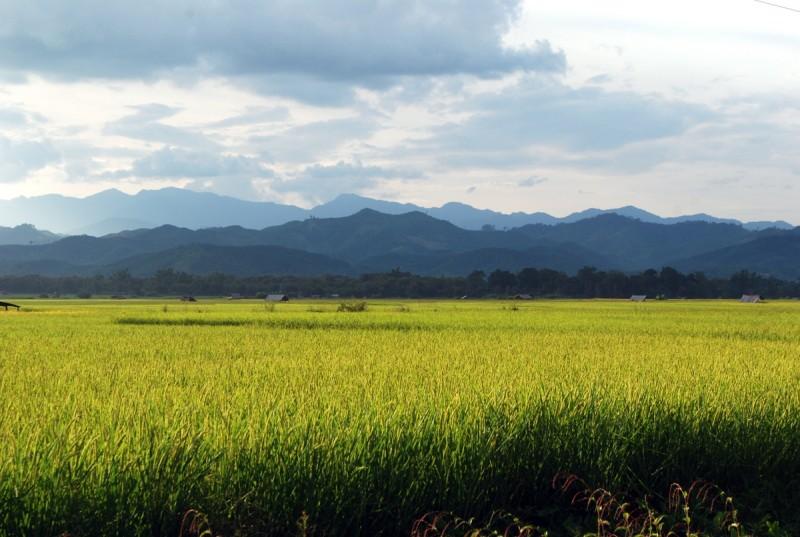 Risaie a perdita d'occhio a Luang Namtha