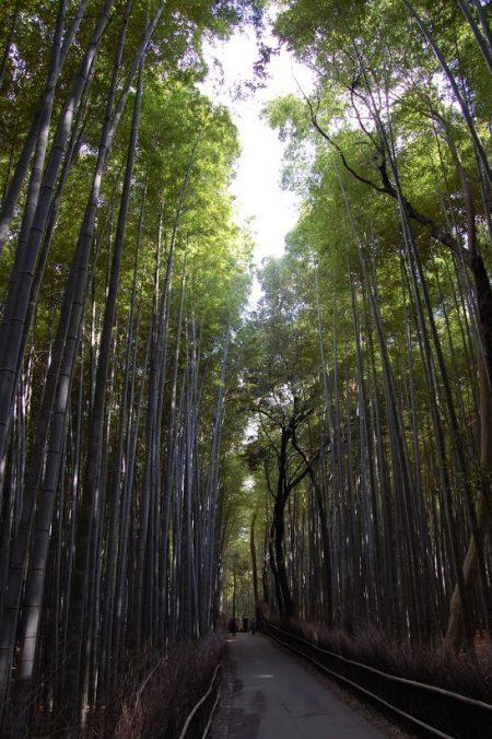 La foresta di bambù ad Arashiyama, Kyoto
