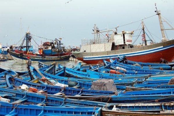 Cosa fare a Essaouira: una passeggiata al porto