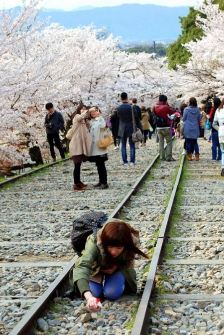 Fioritura dei ciliegi a Keage, Kyoto