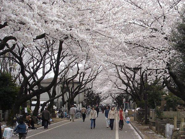 Il cimitero di Yanaka in primavera