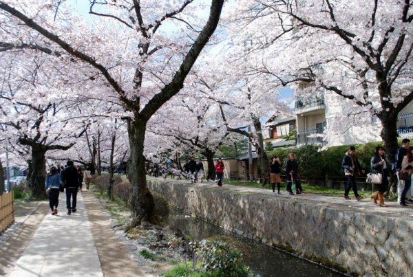 Sentiero della filosofia in primavera, Kyoto