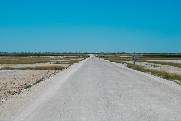 Namibia in auto: una strada dell' Etosha National Park