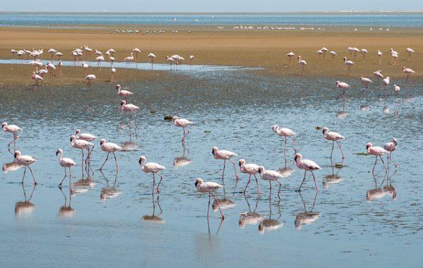 Fenicotteri a sud di Walvis Bay (