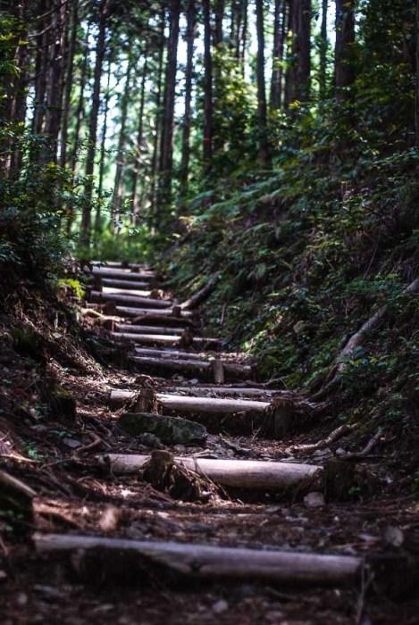 Un tratto del sentiero Nakahechi