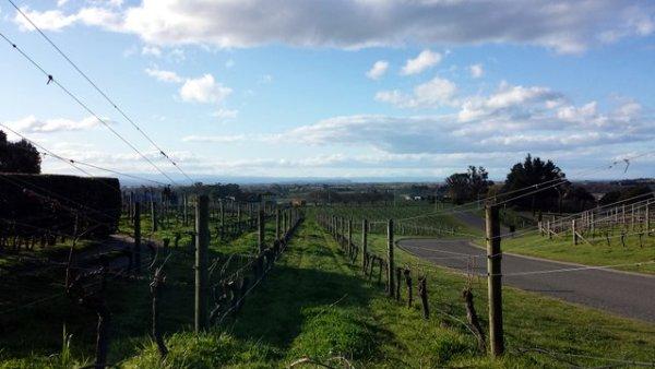 Le vigne di Havelock North