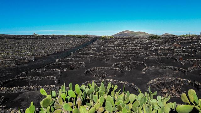 Vigne a perdita d'occhio vicino a La Geria e, sullo sfondo, i rilievi dei vulcani (foto di Patrick Colgan, 2018)