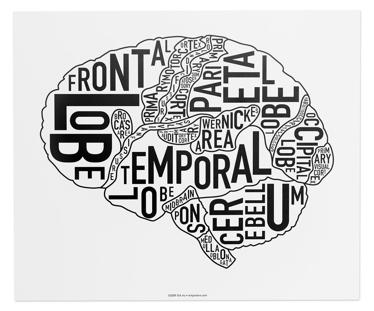 Brain Anatomy Art 15 X 12 5 Classic Black Amp White Poster