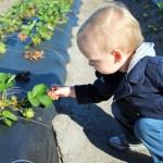 Berry Picking in Oviedo
