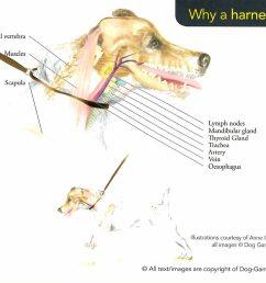 dog neck anatomy [ 1000 x 885 Pixel ]