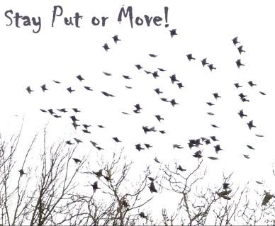 stay put or move orlando espinosa