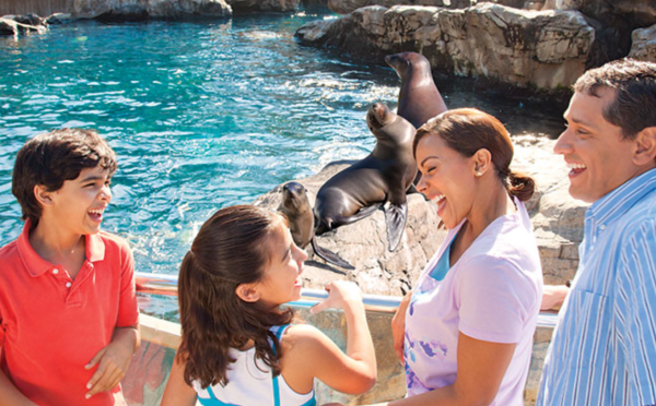 SeaWorld Orlando free teacher card: image of teacher and guests meet sea lions at SeaWorld