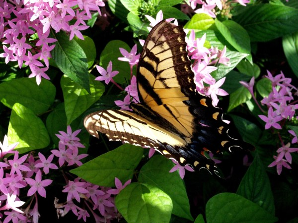 Best free & cheap things to do in Orlando: image of butterfly at Leu Gardens