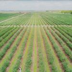 U-Pick Farms near Orlando