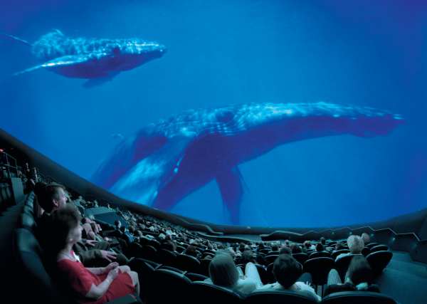 Orlando Science Center: image of people watching a film featuring big whales
