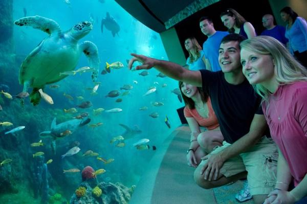 SeaWorld Orlando: imagen de personas viendo nadar a las tortugas en TurtleTrek