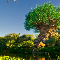Disney's Animal Kingdom Park Hours Extended on 27th September