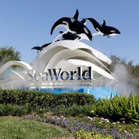 SeaWorld Orlando Files Plans for 2021 Attraction; B&M Wing Coaster in the Works?