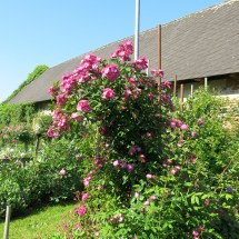 Rosengarten Laafeld 072