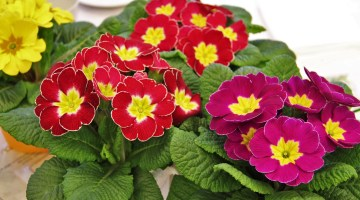 Plantas florecen invierno