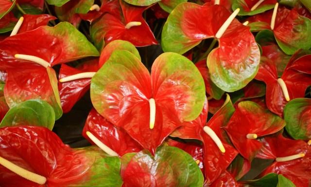 Flores hidroponicas, plantas hidroponicas de interior