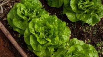 Fertilizantes orgánicos para un jardín saludable