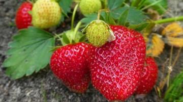 Fertilizantes orgánicos para tener un jardín saludable