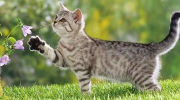 Cómo alejar a los gatos del jardín