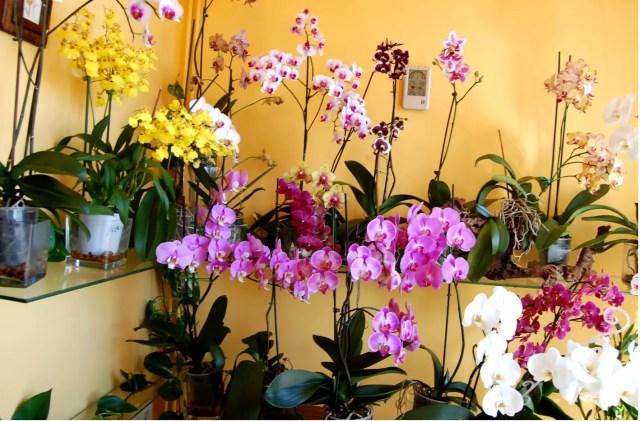 Ubicación de las orquídeas