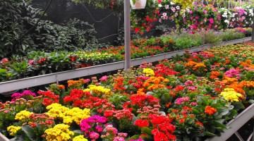 Beneficios de las plantas ornamentales