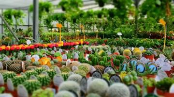 Comprar plantas ornamentales
