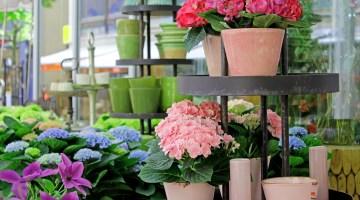 Consejos para comprar plantas de interior