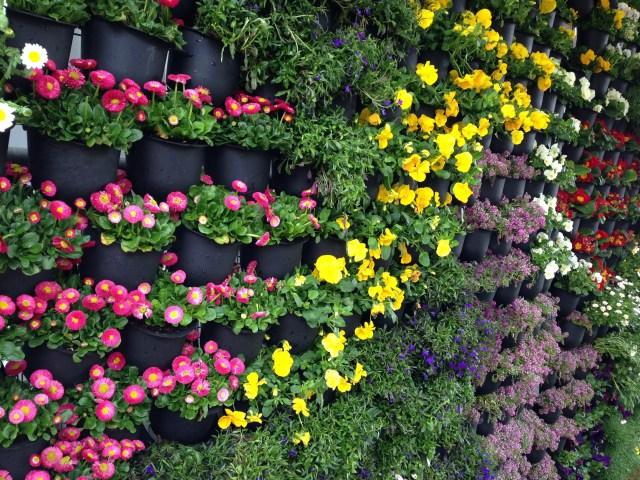 Jardín vertical con plantas anuales