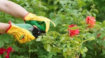 Consejos de jardinería para ahorrar dinero