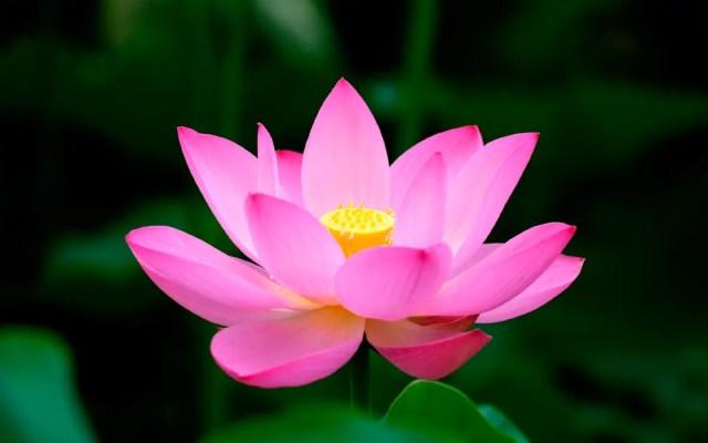 Flor de loto bouquet