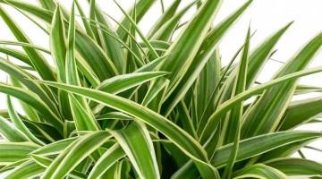 8 Plantas de interior para mantener fresca tu casa