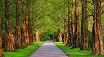 Los mejores árboles de sombra