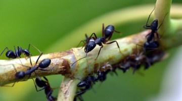 Consejos para eliminar las hormigas del jardín