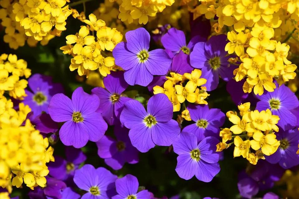Las mejores plantas decorativas