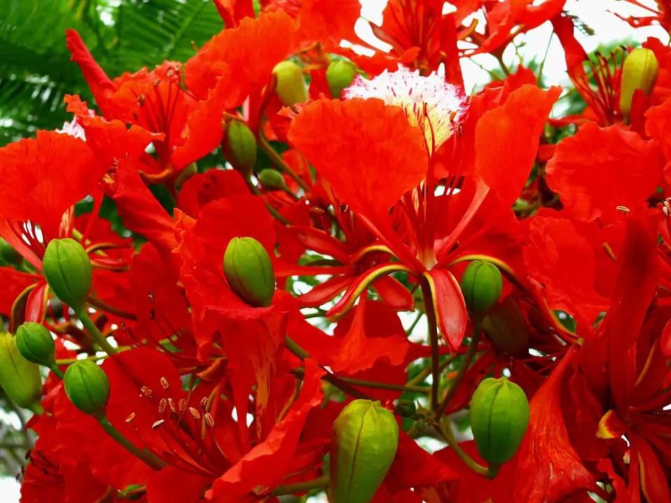 arboles ornamentales con flor