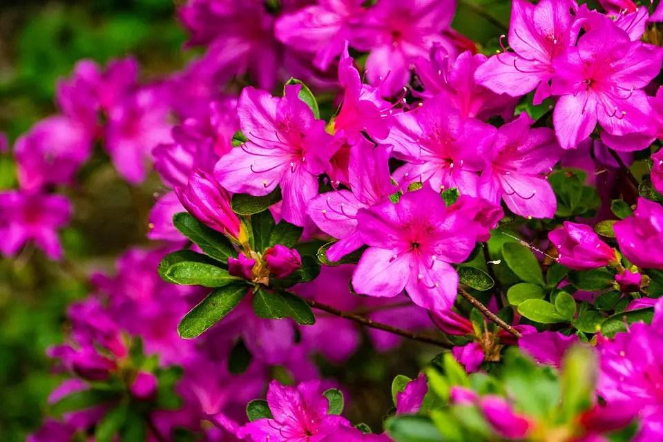 Arbustos ornamentales con flor