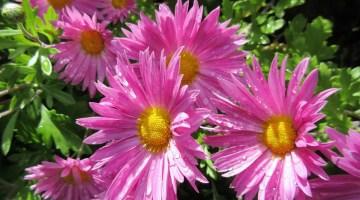 10 Flores ornamentales para darle un toque de color a tu casa