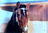 silvio - 0330 - horse 2