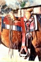 silvio - 0330 - saddle 1