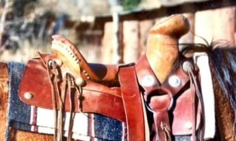 silvio - 0330 - saddle 2
