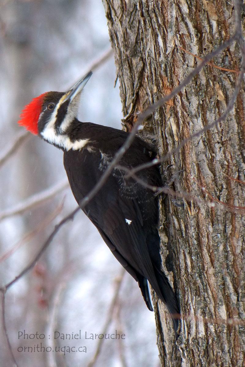 La nature au Saguenay et dans les environs